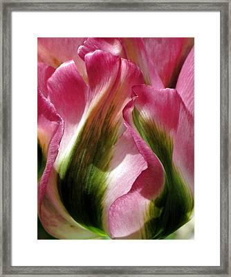 Tulip Framed Print by  Andrea Lazar