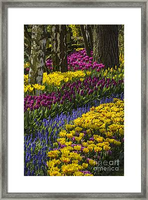 Tulip Beds Framed Print