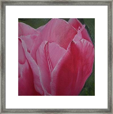 Tulip Blooming Framed Print by Claudia Goodell