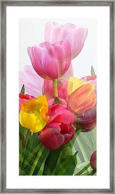 Vertical Tulips 2 Framed Print by Rene Sheret