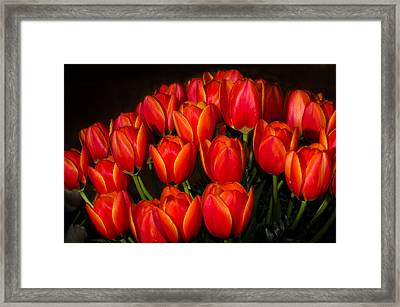 Tulip Bouquet Framed Print by Brian Xavier
