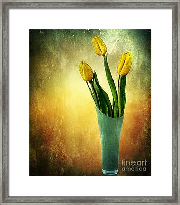 Tulip Bouquet Framed Print by Shirley Mangini