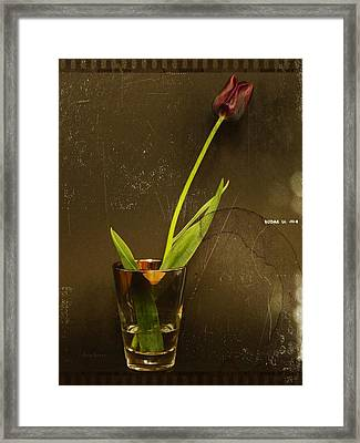 Tulip  Framed Print by Chris Berry
