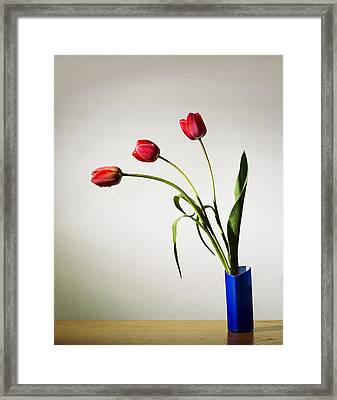 Tulip Composition Framed Print by Ivan Vukelic
