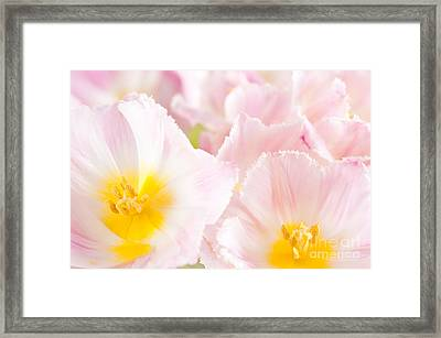 Subtle Pink Tulip Macro Inside  Framed Print by Arletta Cwalina