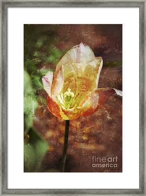 Framed Print featuring the photograph Tulip by Darla Wood