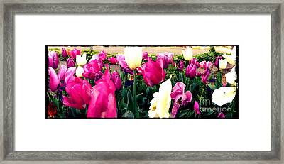 Framed Print featuring the photograph Tulip Delight by Leslie Hunziker