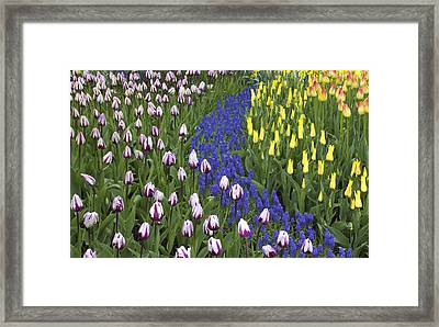 Tulip Design Framed Print by Elvira Butler