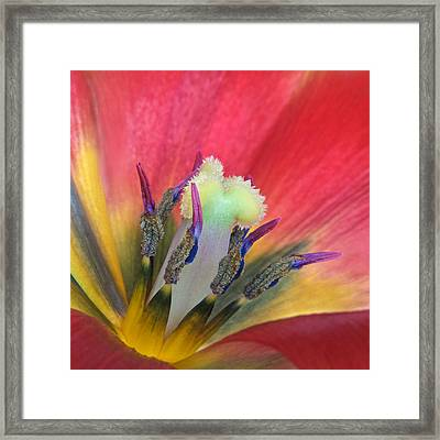 Tulip Detail Framed Print by David and Carol Kelly