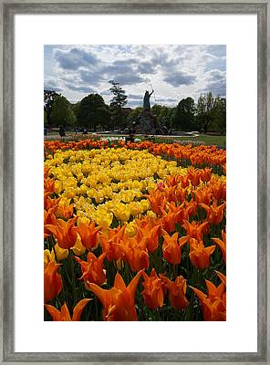 Tulip El Nino And Yellow Lily A Framed Print by Brian Jones