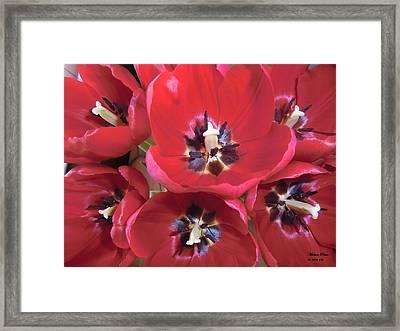 Tulip Fantasy Limited Edition Of 33 Framed Print