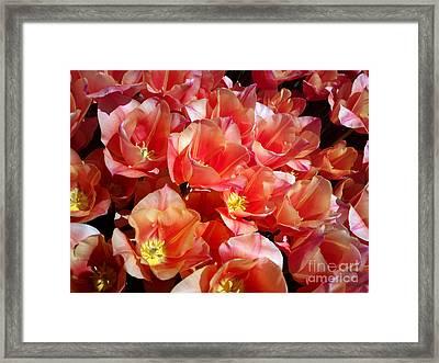 Tulip Festival - 39 Framed Print