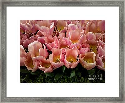 Tulip Festival - 5 Framed Print