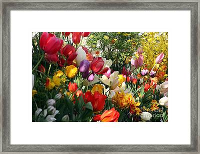 Framed Print featuring the photograph Tulip Festival by Mary Lou Chmura