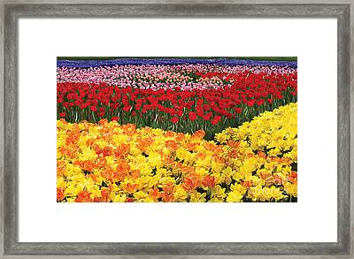 Framed Print featuring the digital art Tulip Field by Tim Gilliland