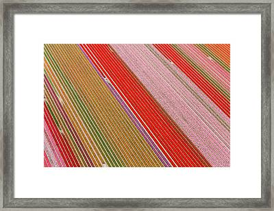 Tulip Fields, North Holland, Netherlands Framed Print by Peter Adams