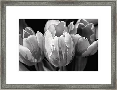 Tulip Flowers Black And White Framed Print by Jennie Marie Schell