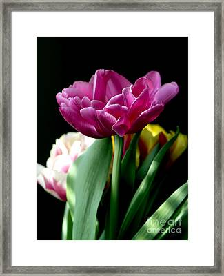 Tulip For Easter Framed Print