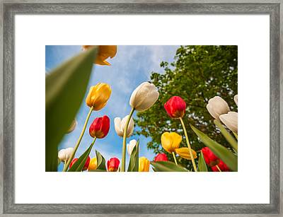 Tulip Forest Framed Print