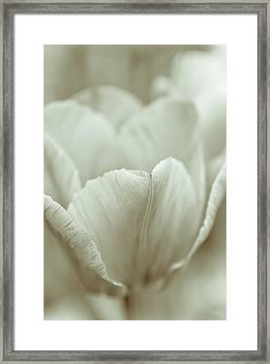 Tulip Framed Print by Frank Tschakert
