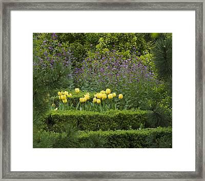 Tulip Garden Framed Print by Frank Tschakert