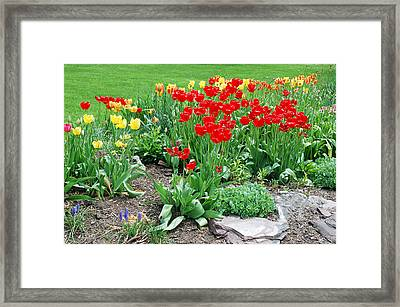 Tulip Gardenscape Framed Print by Aimee L Maher Photography and Art Visit ALMGallerydotcom