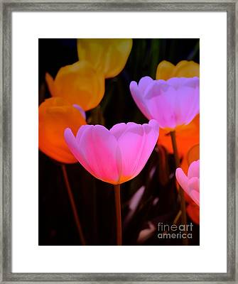 Tulip Glow Framed Print by Kathleen Struckle