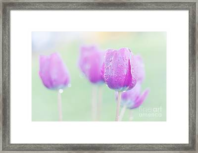 Tulip Fantasy  Framed Print by Janet Burdon