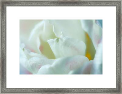 Framed Print featuring the photograph Tulip by Jonathan Nguyen
