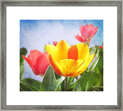 Tulip Joy Framed Print