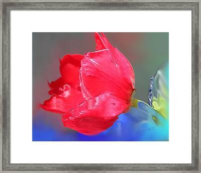 Tulip Framed Print by Kume Bryant