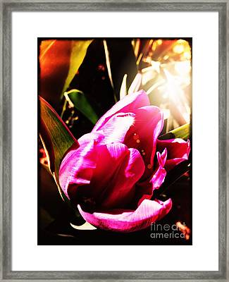 Framed Print featuring the photograph Tulip by Leslie Hunziker
