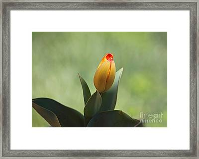 Framed Print featuring the photograph New Beginning by Lisa L Silva