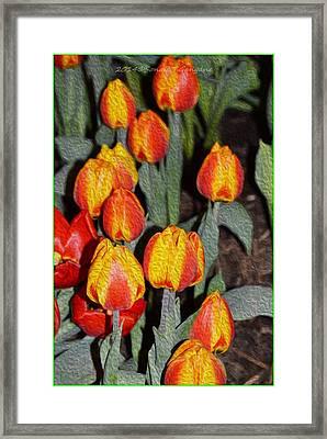 Tulip Mania Framed Print by Sonali Gangane
