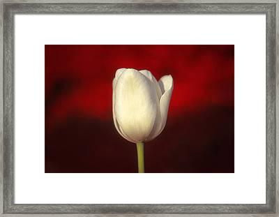 Tulip Framed Print by Marion Johnson