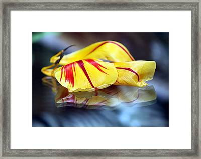 Tulip Reassembled 4 Framed Print