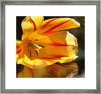 Tulip Reflections Framed Print