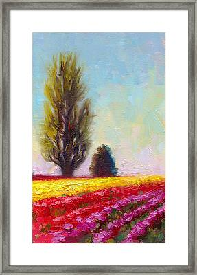 Tulip Sentinels Framed Print by Talya Johnson