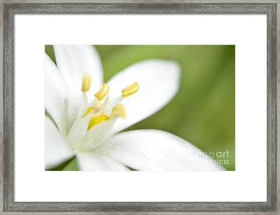 Tulip Shmulip Framed Print by Sheldon Blackwell