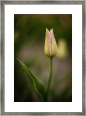Tulip Soliloquoy Framed Print