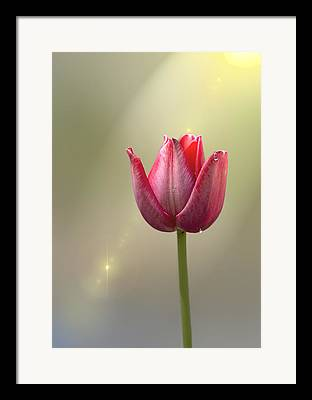 Sunlight On Flowers Digital Art Framed Prints