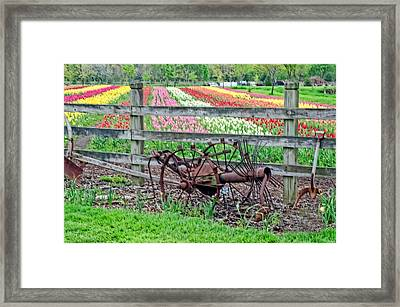 Tulip Time Framed Print by Cheryl Cencich