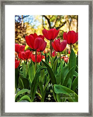 Framed Print featuring the photograph Tulip Time by Peggy Hughes