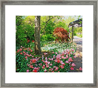 Tulip Trail Framed Print