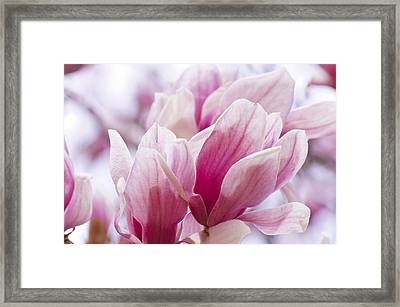 Framed Print featuring the painting Tulip Tree Blooms by Debra Crank