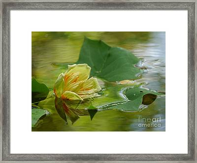 Tulip Tree Flower Framed Print