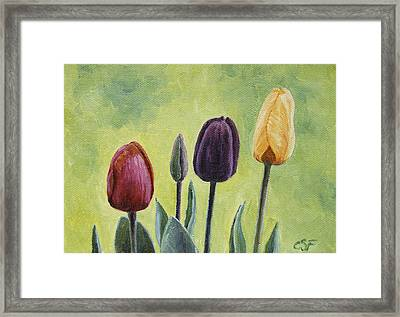 Tulip Trio Framed Print by Crista Forest