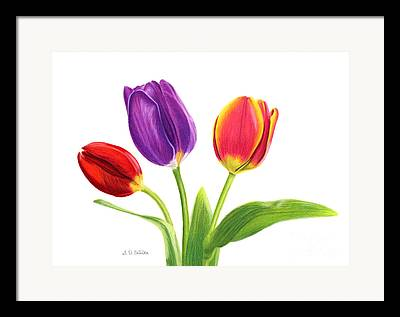 Pinks And Purple Petals Drawings Framed Prints