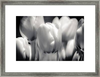Framed Print featuring the photograph Tulip Two by Craig Perry-Ollila