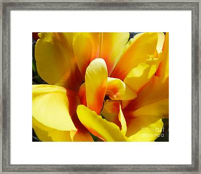 Framed Print featuring the photograph Tulip Unfolding by Kristen Fox